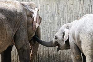 elephant-235609_640